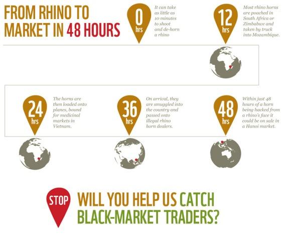rhino horn timetable