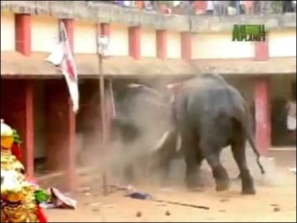 elephant attacks house 1