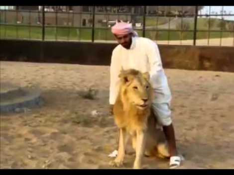 man riding lion