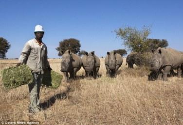 rhino at john humes farm