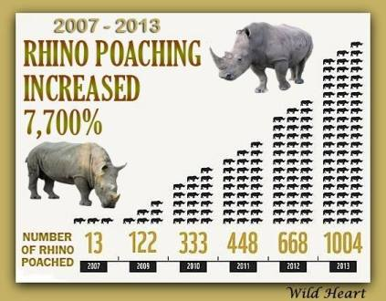 rhino poaching graph 2013