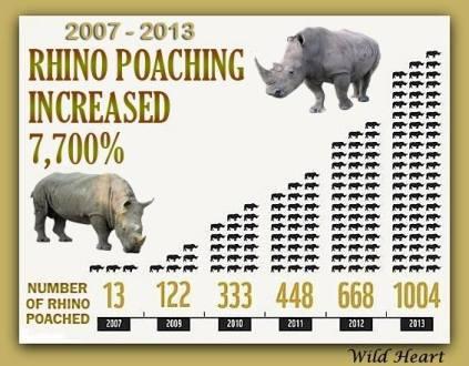 rhino poaching graph 2013