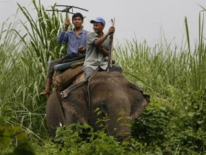 Nepalese wildlife rangers track a radio-collared rhino. (Nat Geographic)