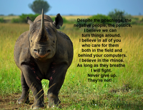 Never give up on rhinos