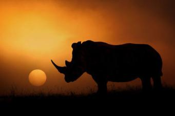 rhino sunset again