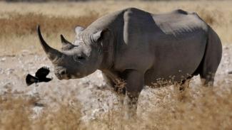 black rhino 3