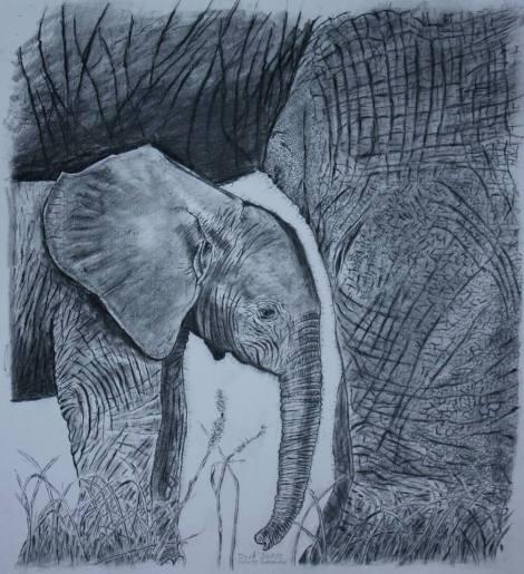 elephant drawing by david joyner