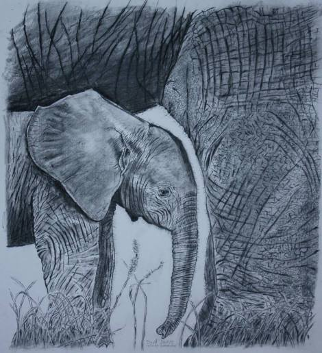 elephant drawing by david joyner