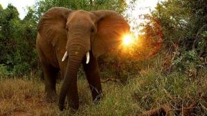 elephant with sun