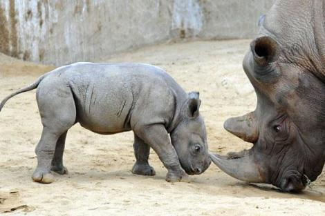 Give a shit about rhinos pic