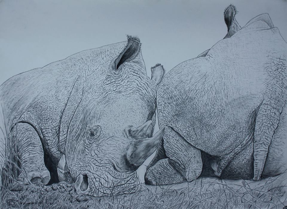 pencil drawings | Fight for Rhinos