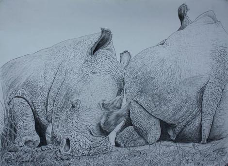 rhino drawing by David Joyner