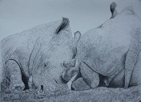 rhino drawing by David Joyner