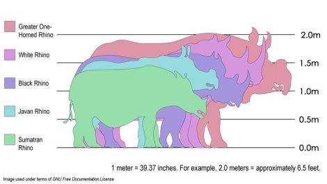 rhino sizes
