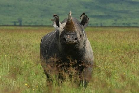 rhino field