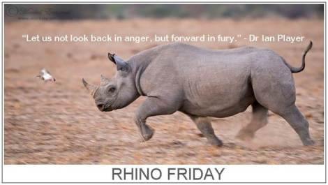 Rhino Friday fury