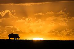 rhino sunset goddbye
