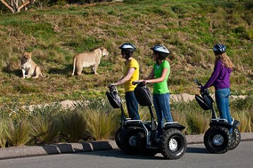 The San Diego Zoo is the most frequented zoo in the US, receiving over 3 million annual visitors.