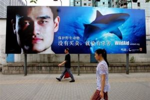Yao Ming's shark protection campaign helped reduce fin demand by 90%