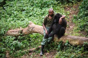 ranger with gorilla