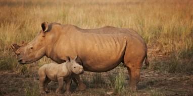 rhino and baby help us