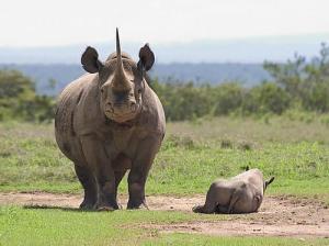 beautifulafricawildanimalspets.com rhinos