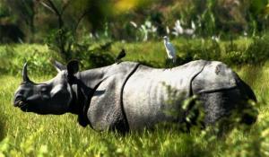 kaziranga rhino 2