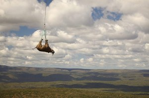 rhino move via green renais epa