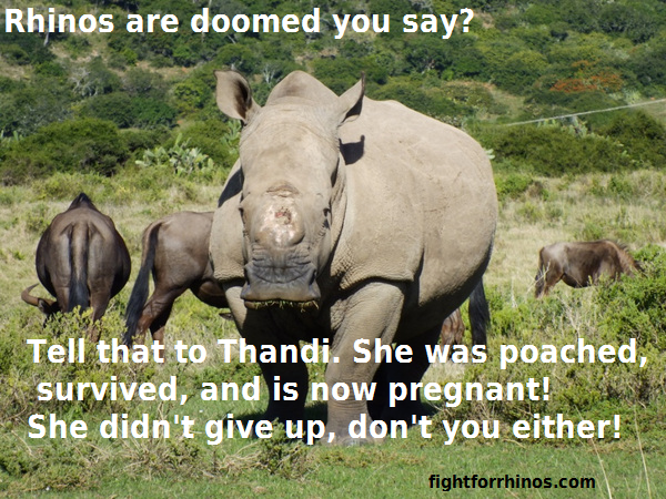 Image result for happy world rhino day 2016 message
