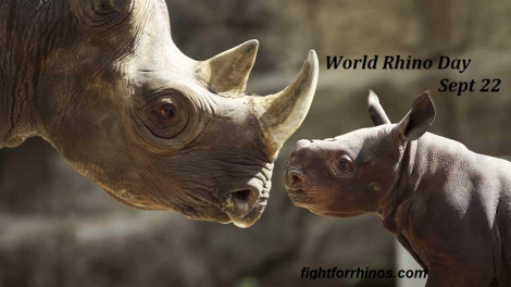 World Rhino Day mom and babe