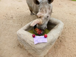 Nola enjoying treats at the San Diego Zoo in the US. Photo via SDZ