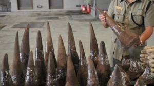 afp rhino horn stockpile
