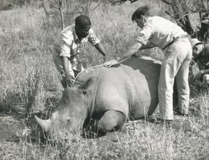 Dr Ian Player Operation Rhino