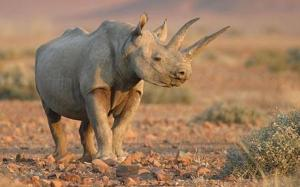 rhino in mara ALAMY