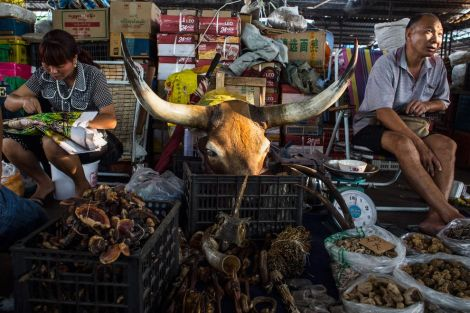 Vendors hawk animal wares, including a bull's head for decoration, in a market stall in Mong La. In this shop and others, customers can buy porcupine quills, tiger claws and penises, horns from deer and mountain goats, and other items from wild and often endangered species for use in traditional Chinese medicine.
