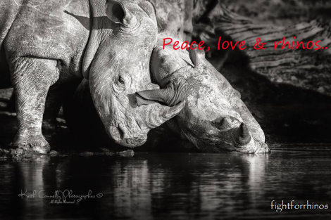 Peace love and rhinos