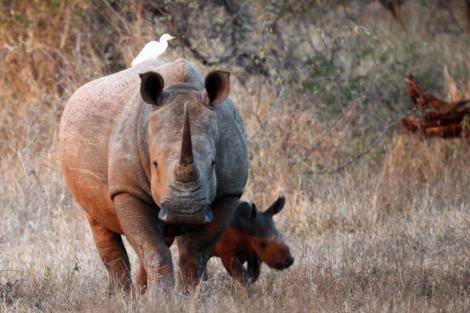 rhinos dan kittwood