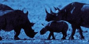 rhinos on moon 2