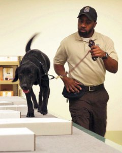 US detector dog