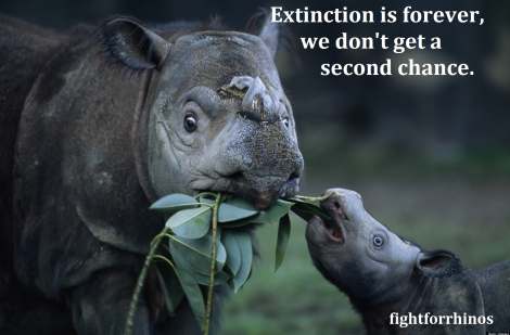 extinction is forever