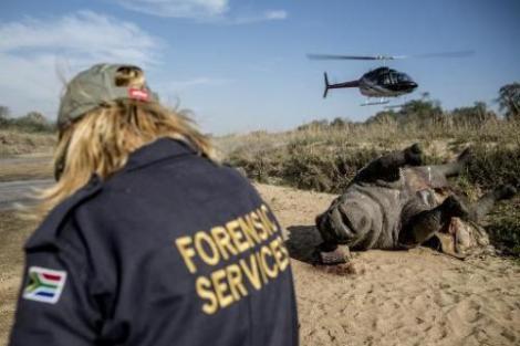 forensics at rhino poaching courtesy of kruger