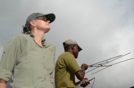 rhino tracking zimbabwe 2