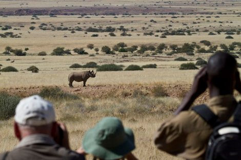 tracking rhino in nw namibia via