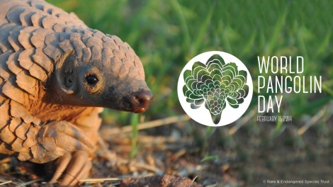 World Pangolin Day 2014