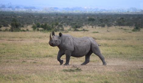 1-Africa 2013 411