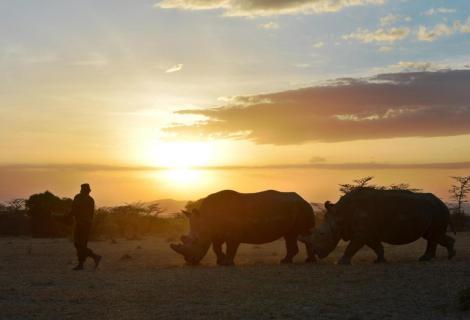 Northern whites in sunset tony karumba AFP