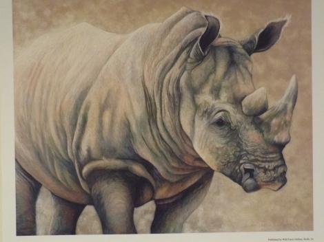 White Rhino by Mona Majorowicz