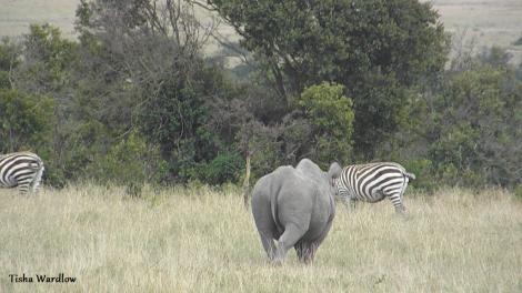 Tisha OPC rhino 2