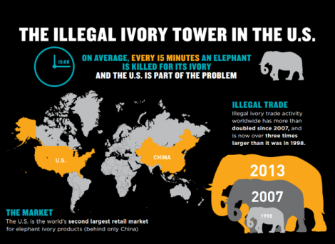 illegal ivory trade in US