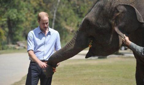 prince william elephant